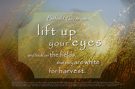 fields are white unto harvest