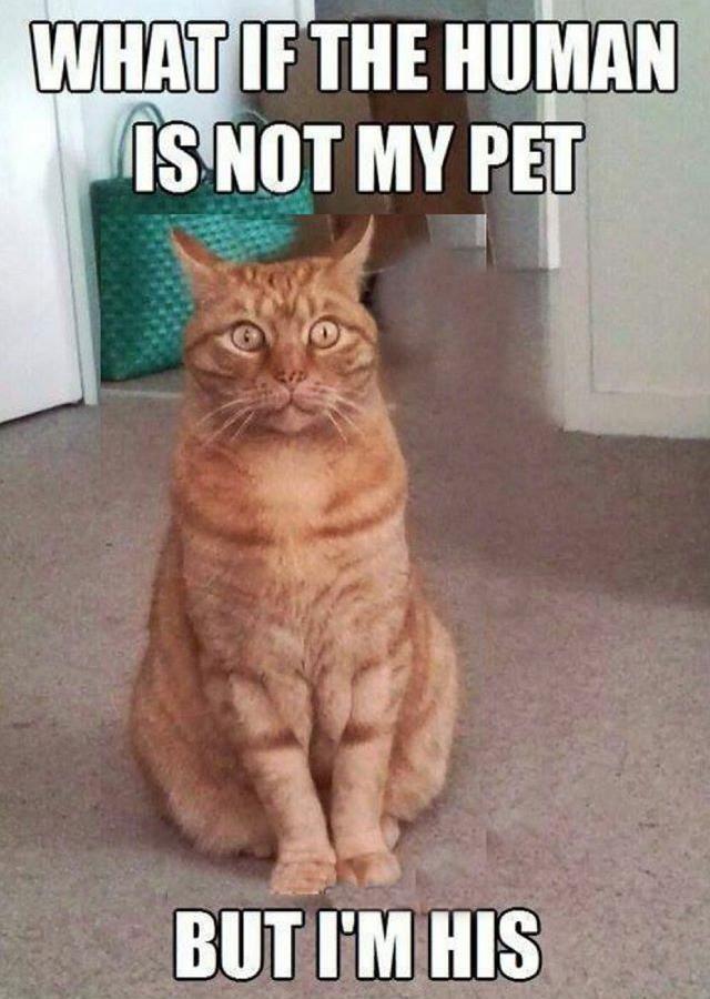 human pet