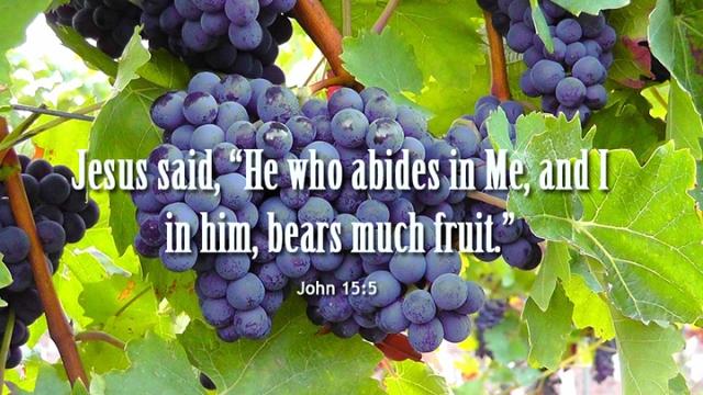 006 bears much fruit