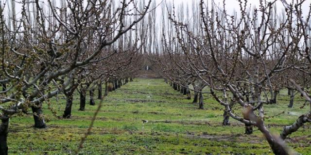 trees no fruit wp