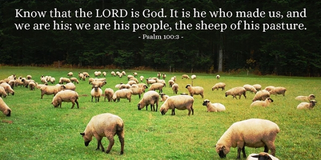 023 sheep of His