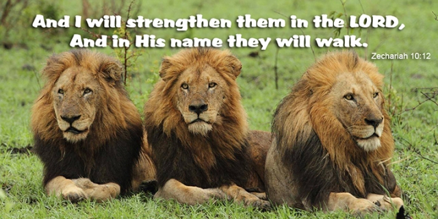 049 strength in the Lord