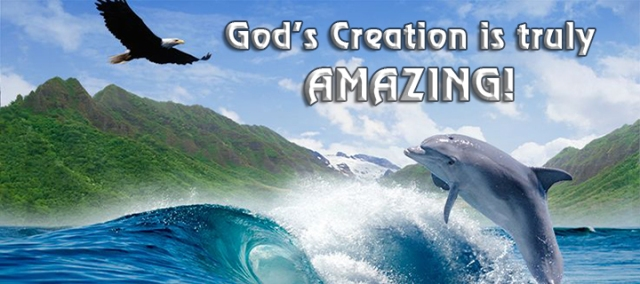 God's creation is amazing