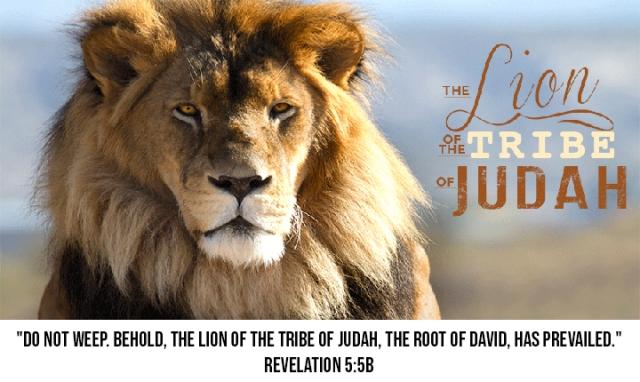lion of judah rev 5_5