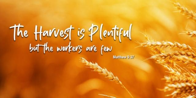 082 harvest is plentiful