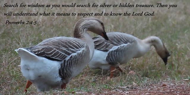 im seek wisdom as hidden treasure