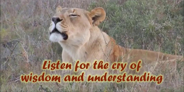 ns listen for the cry of wisdom