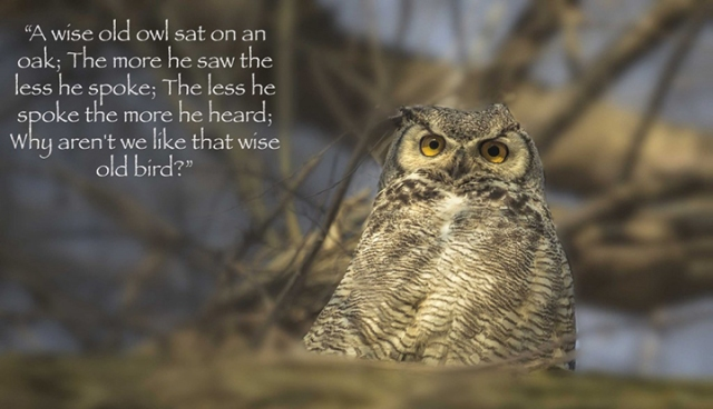 ns wise old owl