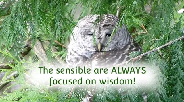 ns sensible people are always focused